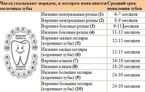 Таблица появления зубов