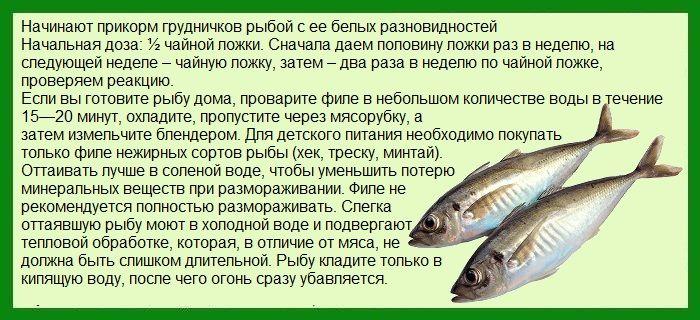 Рыба для грудничка - прикорм